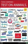 Laboratory testing - Companies that test on animals 05